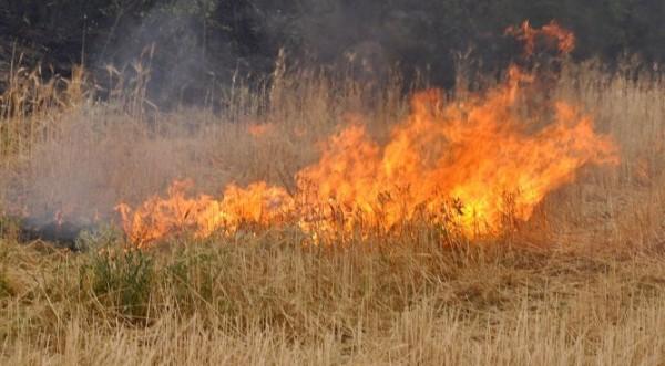 пожары в хасково болгария