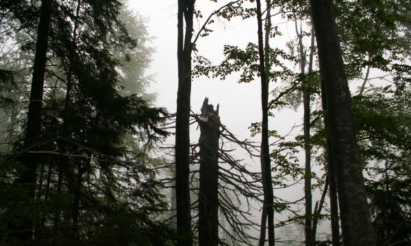 Лумна пожар в резерват на Витоша