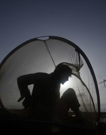 Разликата между ужилване и ухапване от насекомо