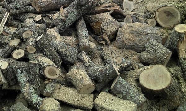 Горски спипаха 78 кубика дърва без документи край Сливен