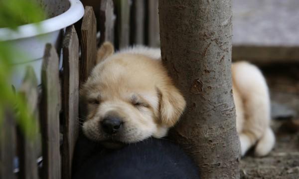 Фактите говорят: Собствениците на кучета – по-секси