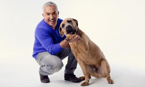 Без кучета при Говорещия с кучета Сизър Милан