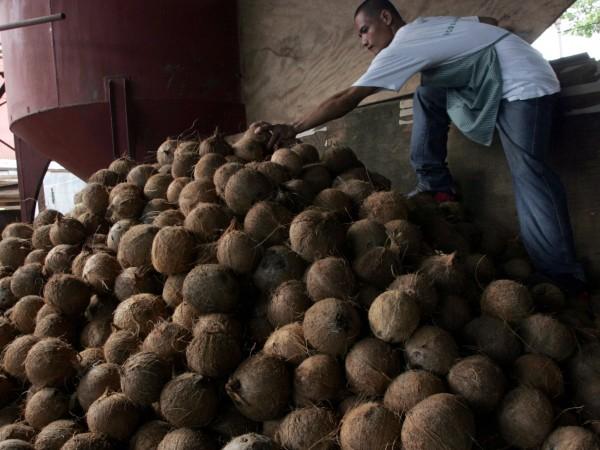 Препоръчваното като полезно кокосово масло е нездравословно като говеждата мазнина