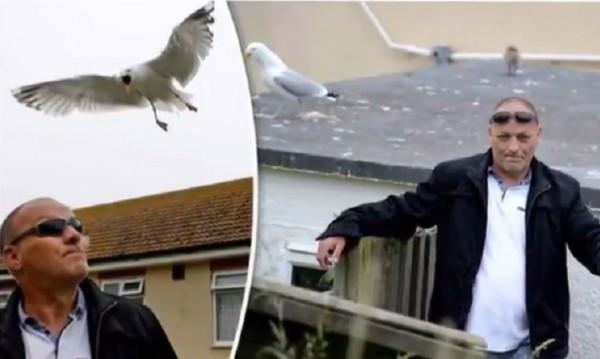 Британец – заложник на гневни чайки, бранят малкото си