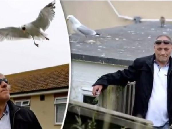 Британецът Крис Причард е заложник на семейство чайки, което го