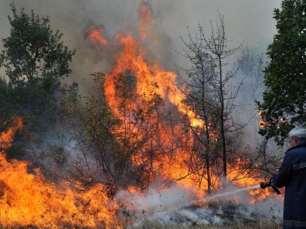 Изпълнителна агенция по горите призовава всички да бъдат особено внимателни