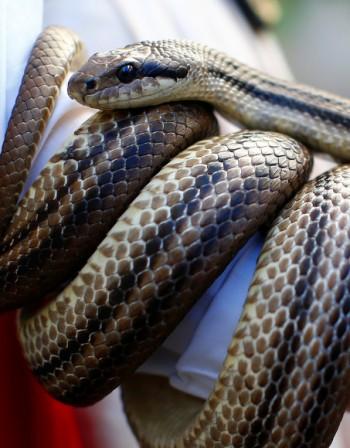 Ухапване от змия – Как да реагираме?