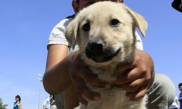 Жестокост: 10-годишен уби  пред връстници малко кученце