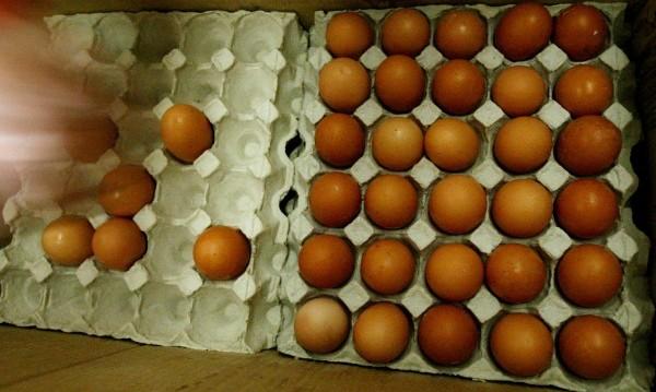 21 тона яйчен жълтък спрян! Без годност, без документи