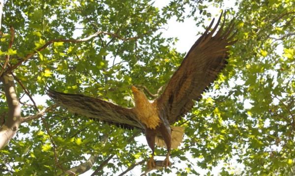 """""""За да има орли"""" - редките птици """"разперват"""" криле"""