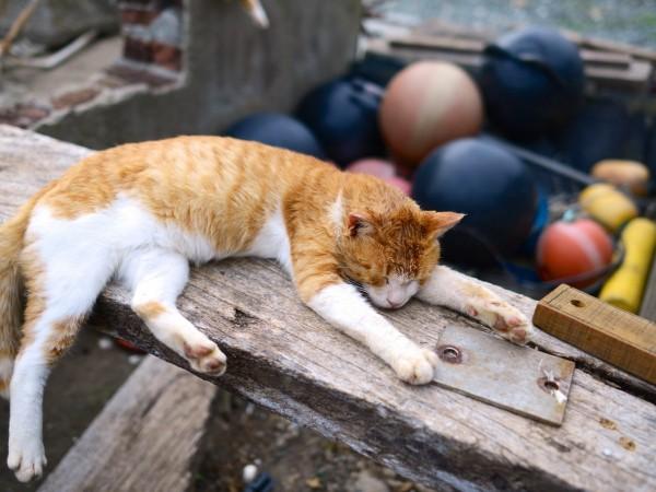 Снимка: Антинобелите: Котките течни ли са и растат ли ушите?