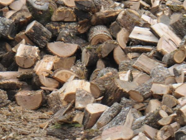 В навечерието на зимата кризата с дървата за огрев в