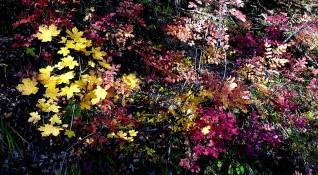 """Без будилник"": Есенна приказка в прелестна Беласица"