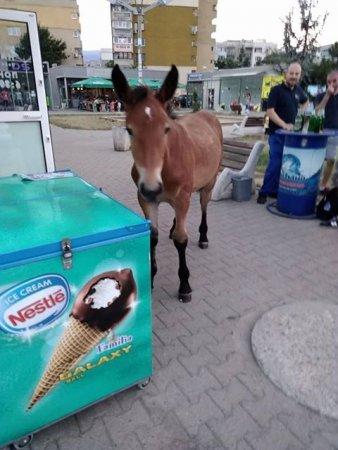На опашката за... сладолед