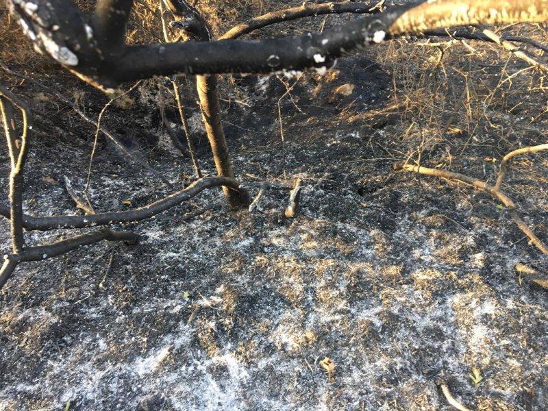Пожарът във вилната зона над Хисаря е потушен